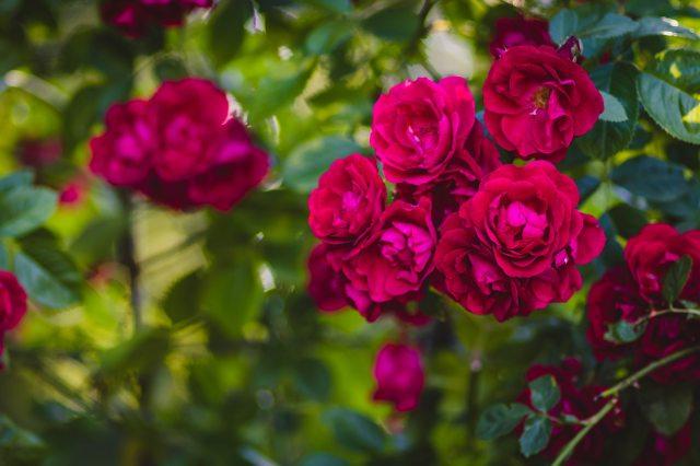 beautiful-bloom-blooming-1251397