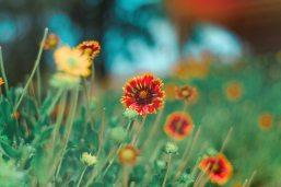 beautiful-bloom-blooming-1076503
